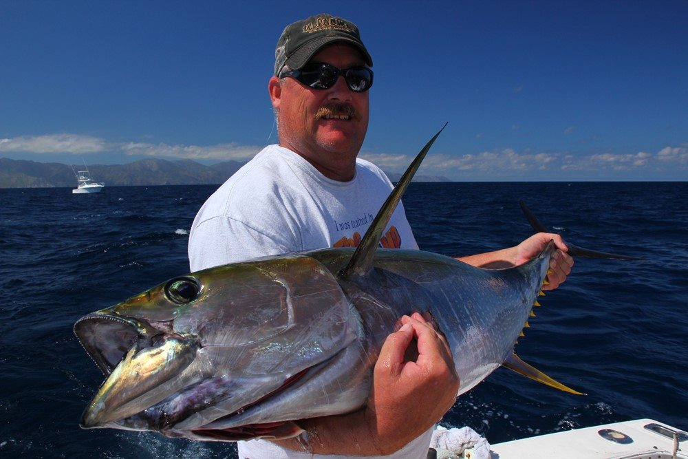 cabo san lucas deep sea fishing resorts sea of cortez